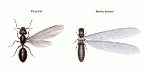 Termite Swarm Season In The Lowcountry Palmetto Exterminators