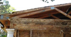 Formosan Damage Roof Line