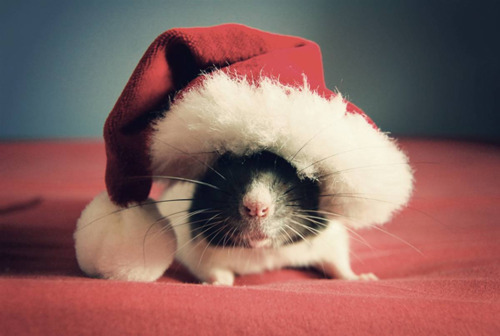 cute christmas mouse - Christmas Mouse Myrtle Beach