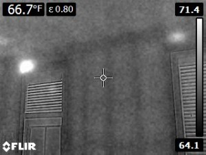 Flir Thermal image of Formosan termites
