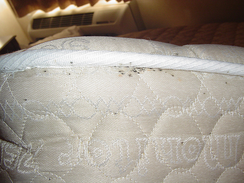 Bed Bugs Tips What You Need To Know When You Are Traveling