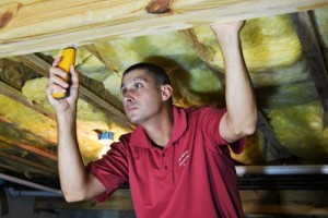 termite-control-(on-real-estate-inspections-page)-opt