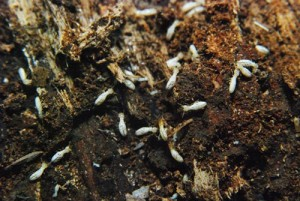 termite-control-(on-termite-protection-page,-top)-opt