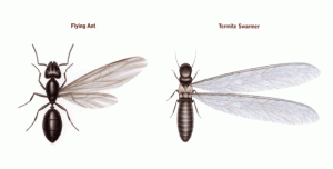 termite swarmers vs ant swarmer