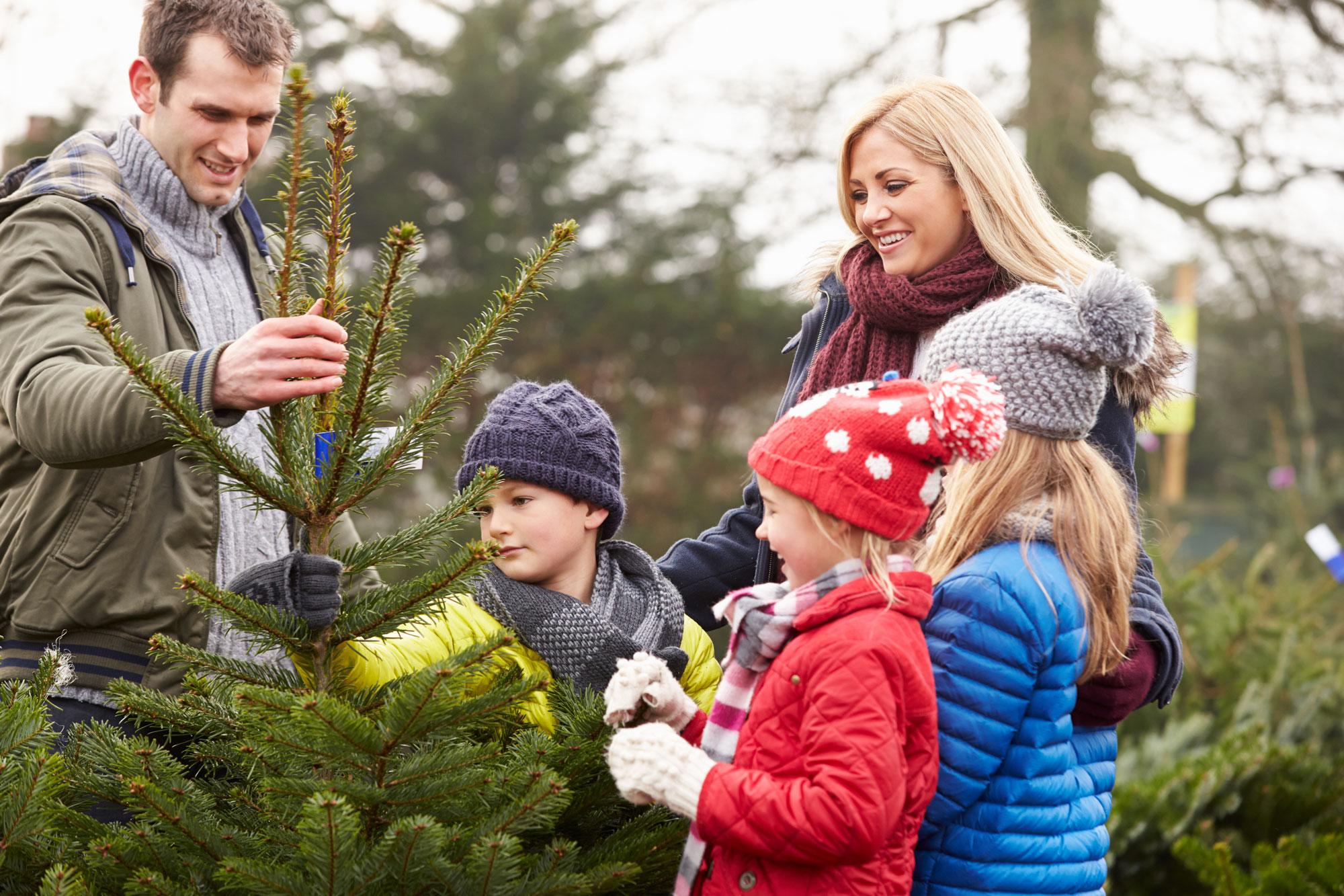 christmas-tree-shopping