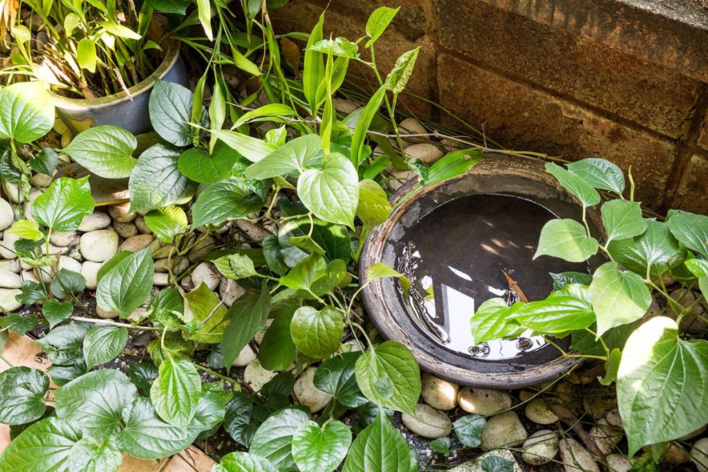 stagnant water in pest season