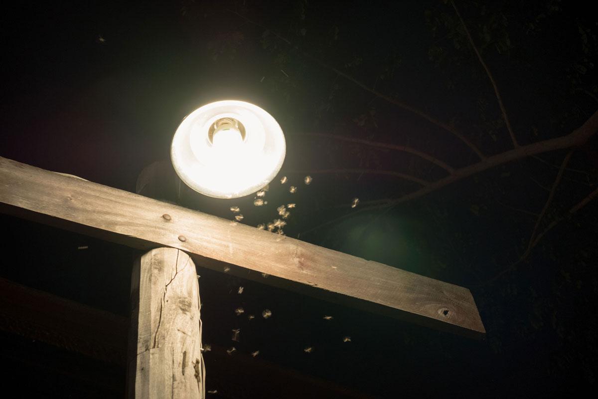 termite swarmers around a light