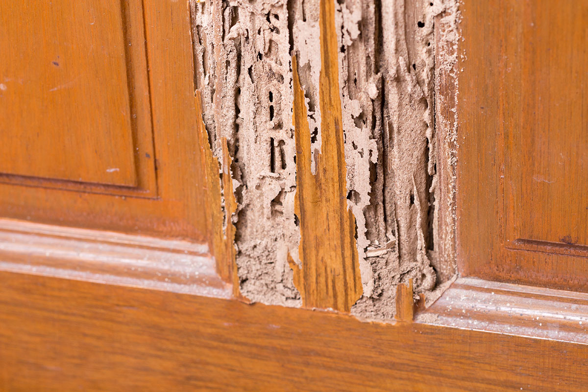 termite damage in a door