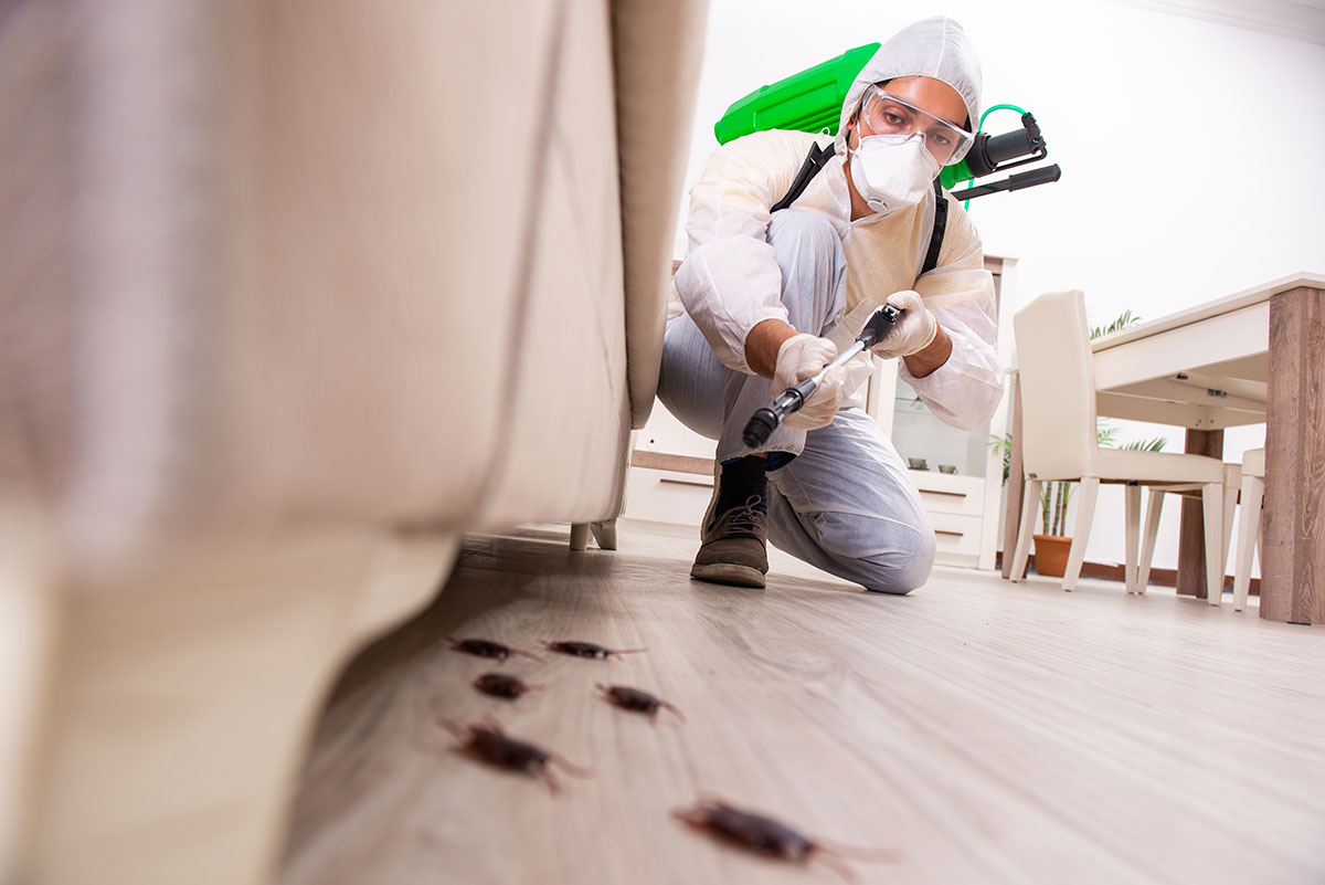 pest exterminator spraying for cockroaches