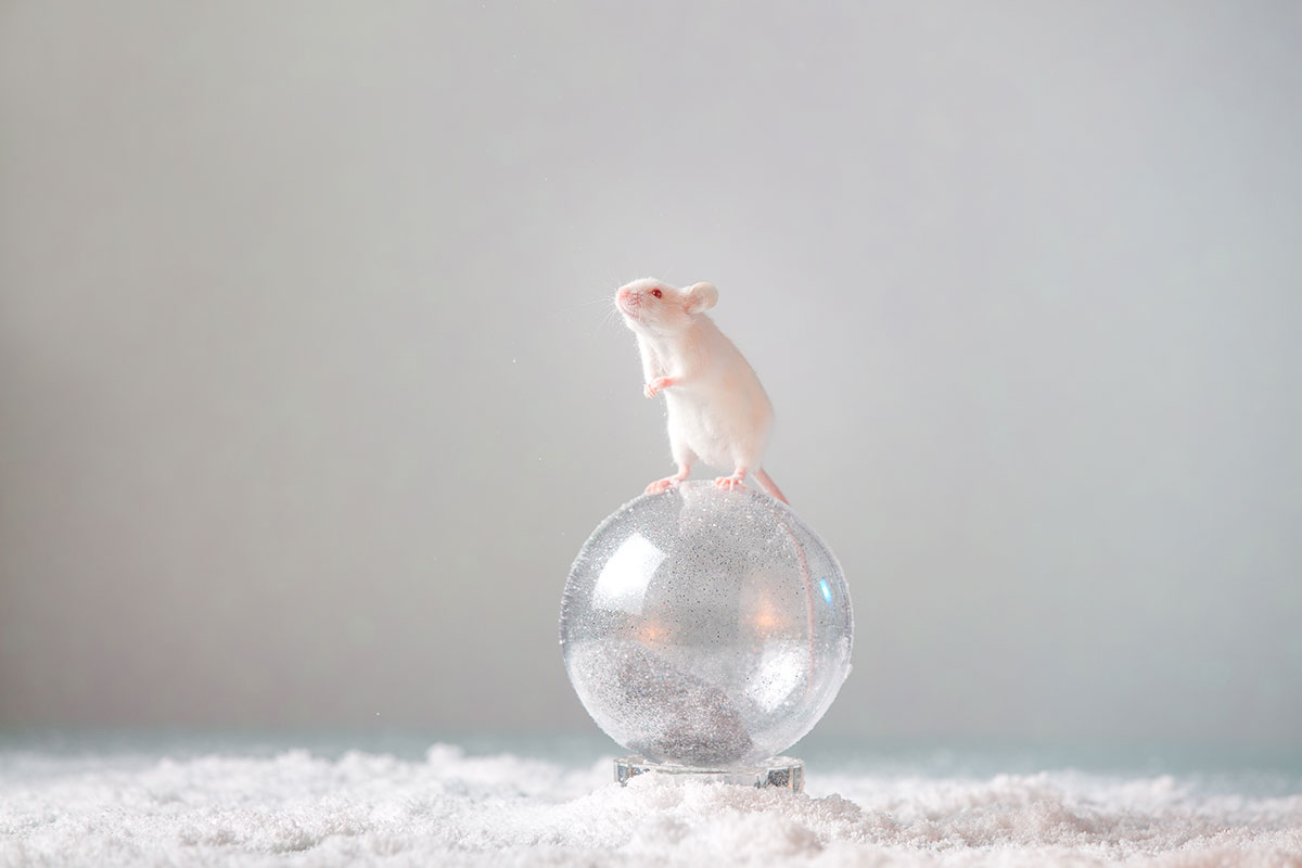white mouse on a christmas ornament