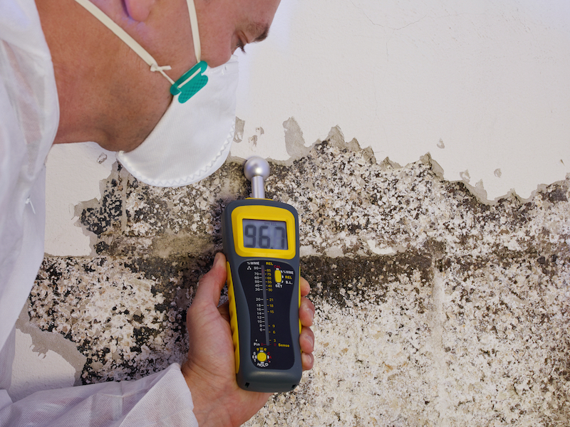 termite-inspection-at-home