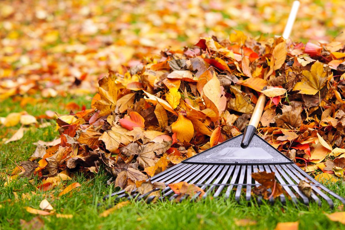 leaf-pile-pests