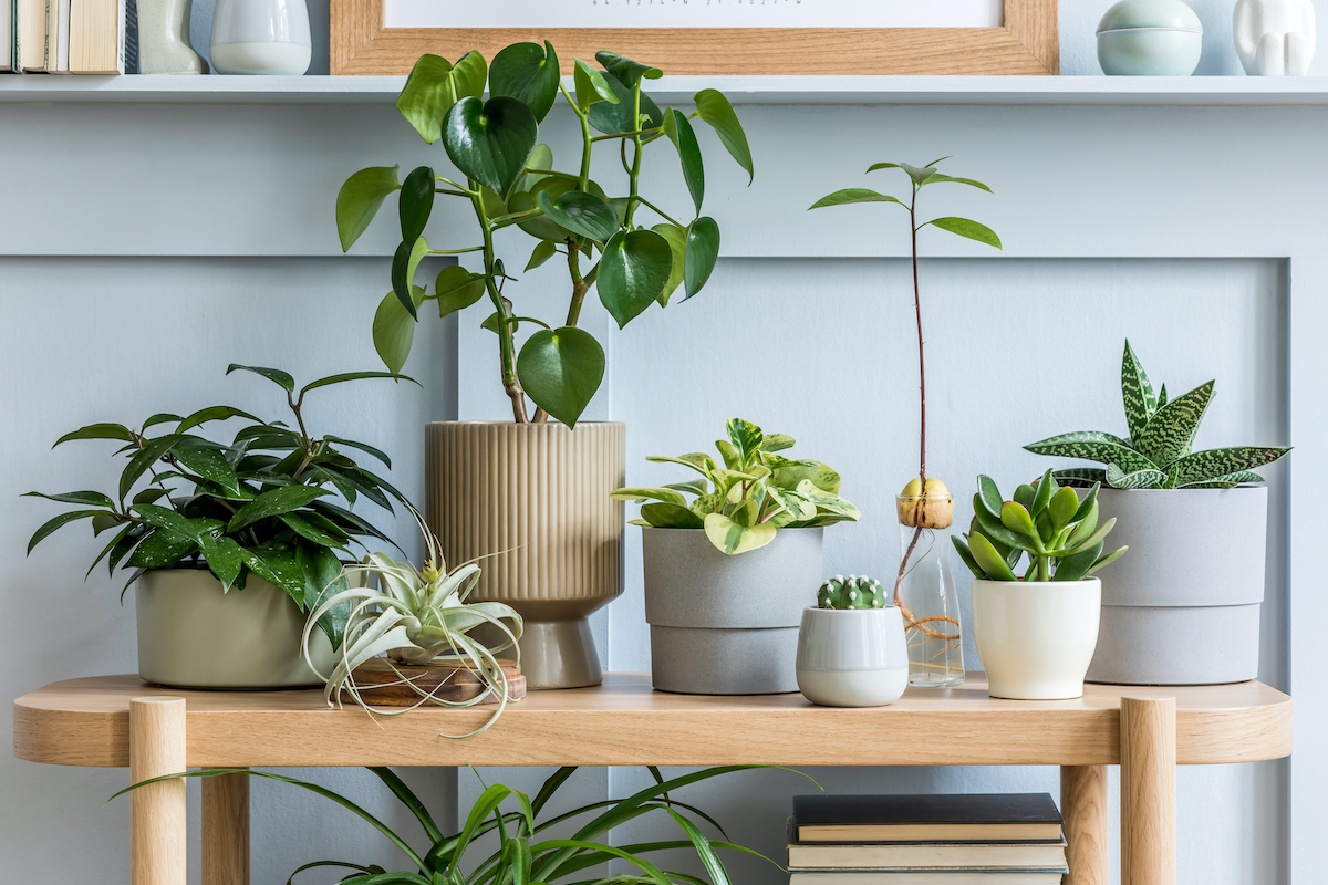 Protect Your Plants From Pests