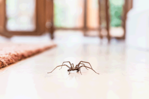 Get Spiders Out of Your Home