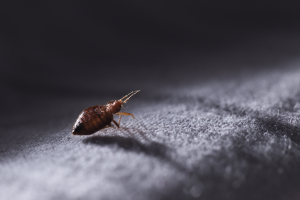palmetto exterminators bed bug FAQs